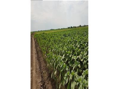 Vindem terenuri agricole suprafete compacte 41 ha si 40 ha