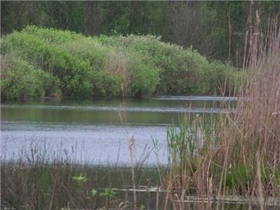 Teren Snagov Ghermanesti  latura Lac si Padure 70000