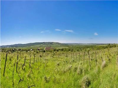 Vanzare teren 60000 mp, in Plopu, la 10 km de Ploiesti