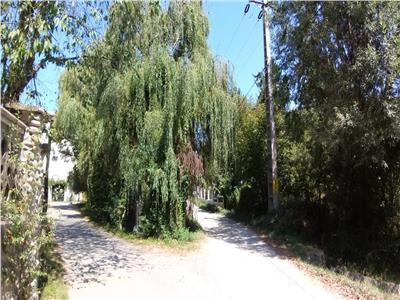 Vanzare teren langa Manastirea Viforata